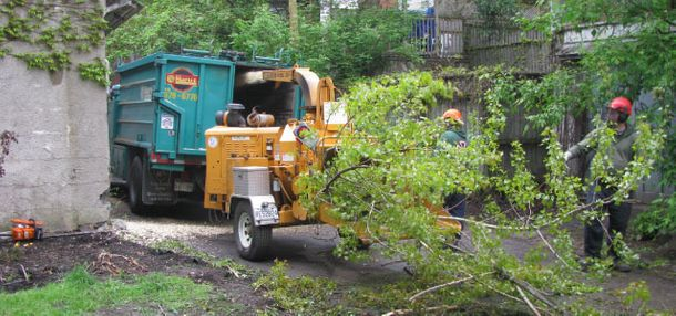 Arborists cleaning after pruning trees