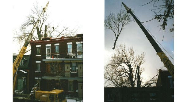Tree removal with the help of machines