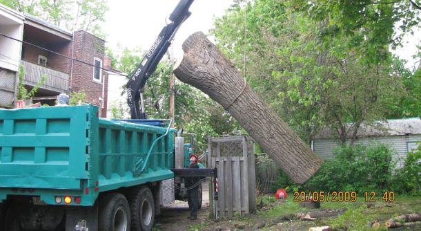 Removal of a tree trunk